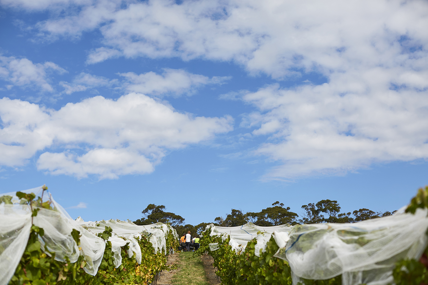 We enjoyed warm conditions through the harvest period