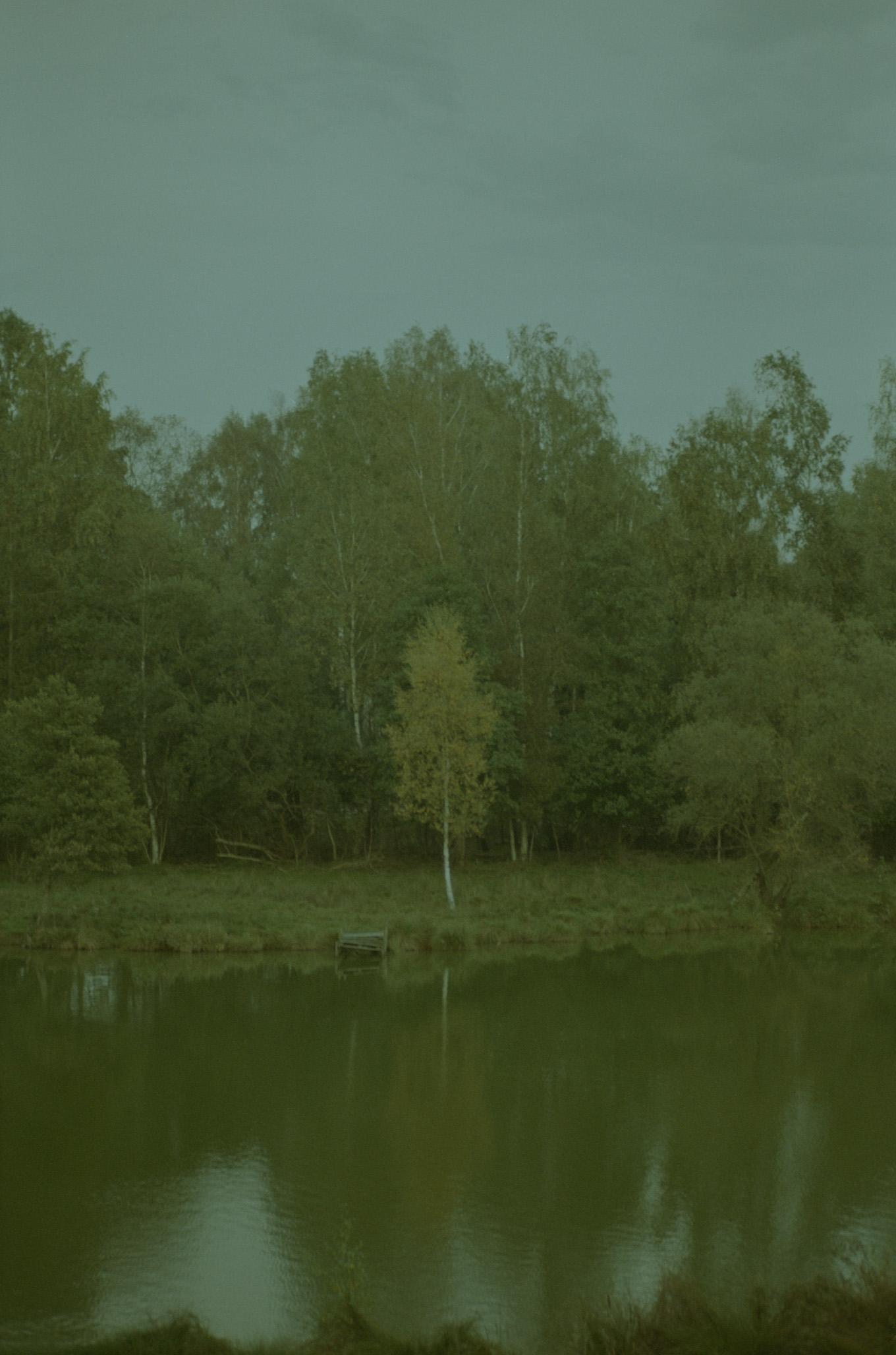 TREES1.jpg