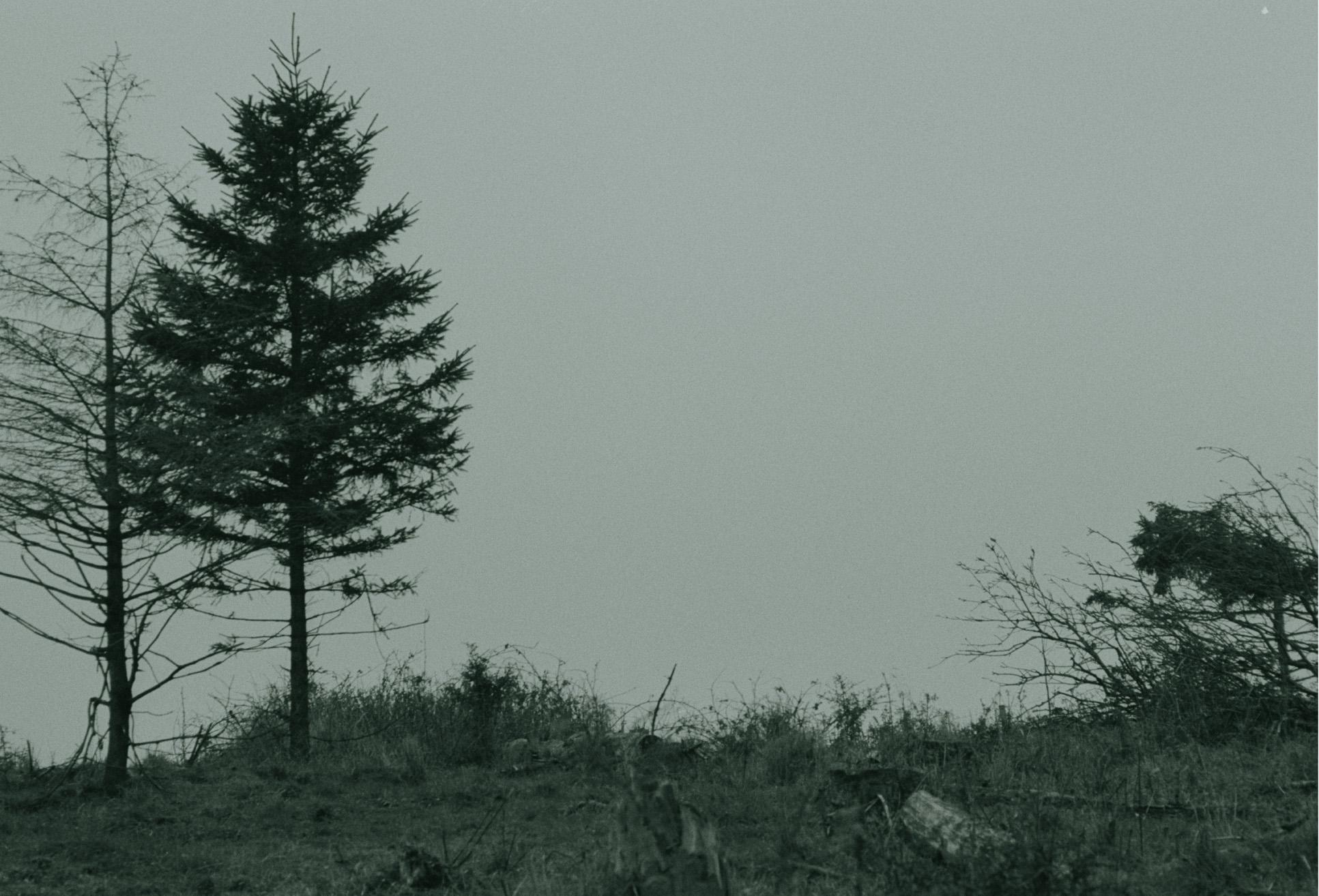 TREES2.jpg