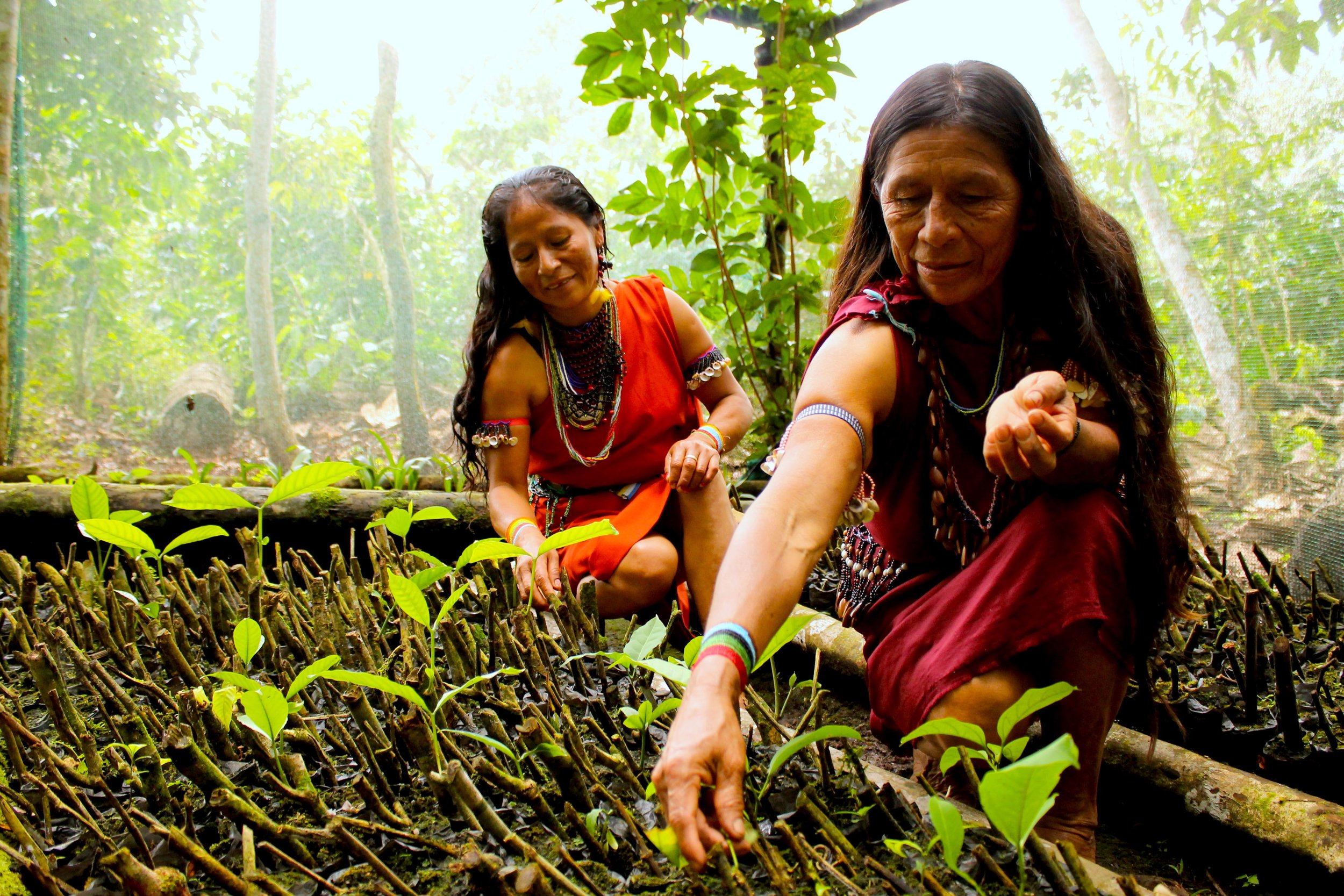 © Ana Yi Women working on their seedlings in the Nuwas Forest