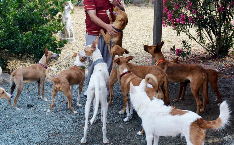 group hounds.jpg