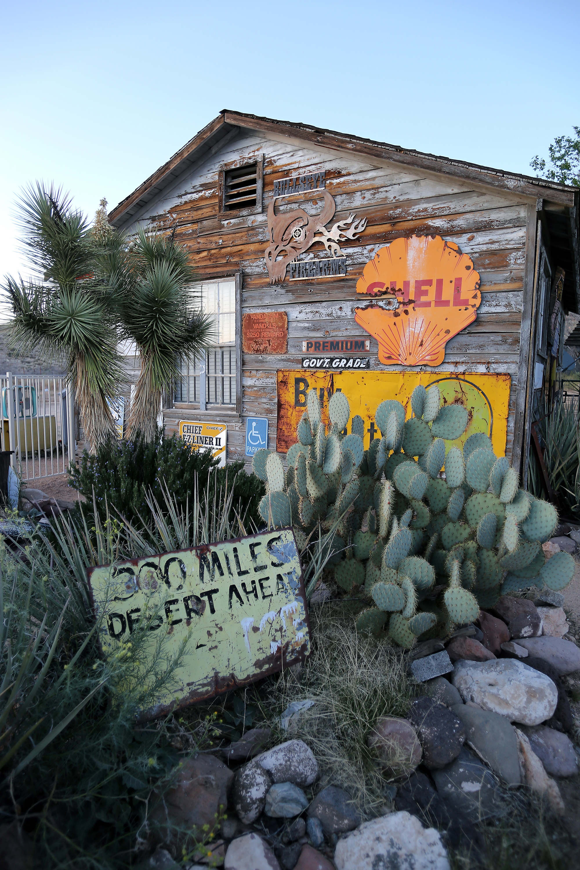 Hackbury Cacti.jpg