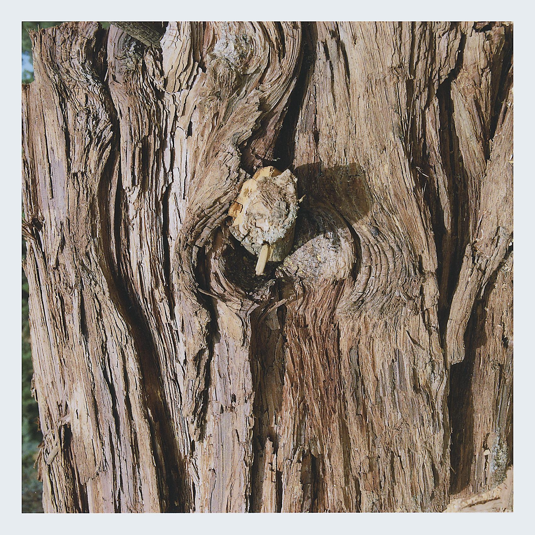 Redwood Bark.jpg