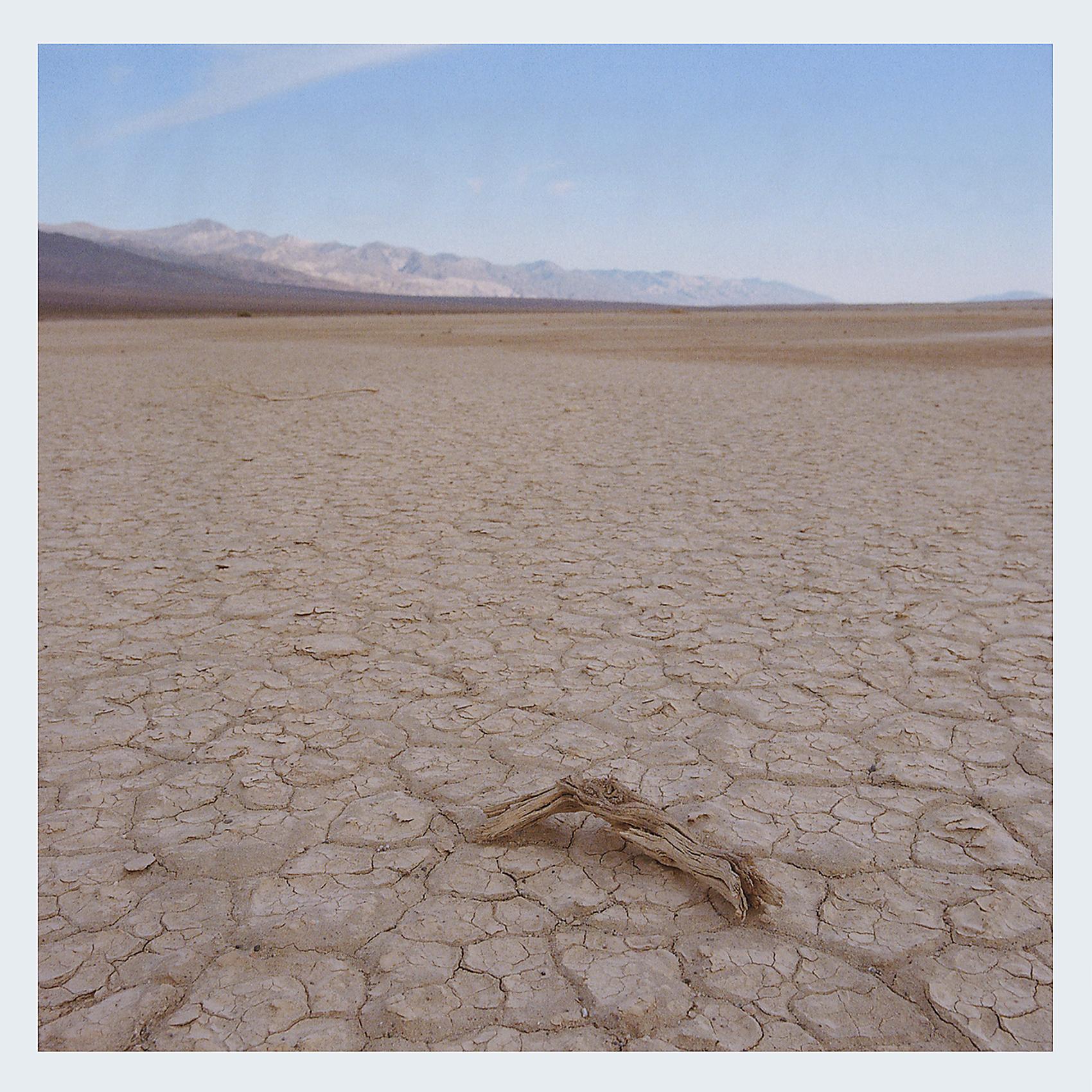Death Valley Log.jpg