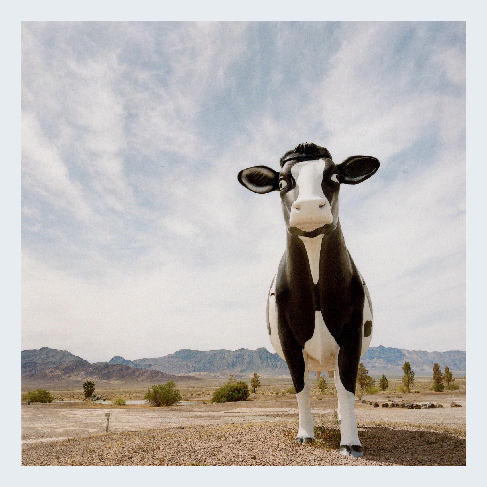 NEVADA COW FINAL.jpg