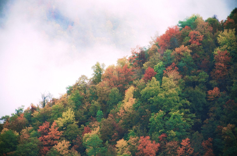 Great Smoky Mountains NP, TN