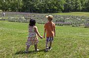 Laveanne Lavender Labyrinth