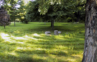 Barrie Arboretum summer
