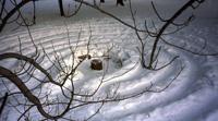 Barrie Arboretum winter