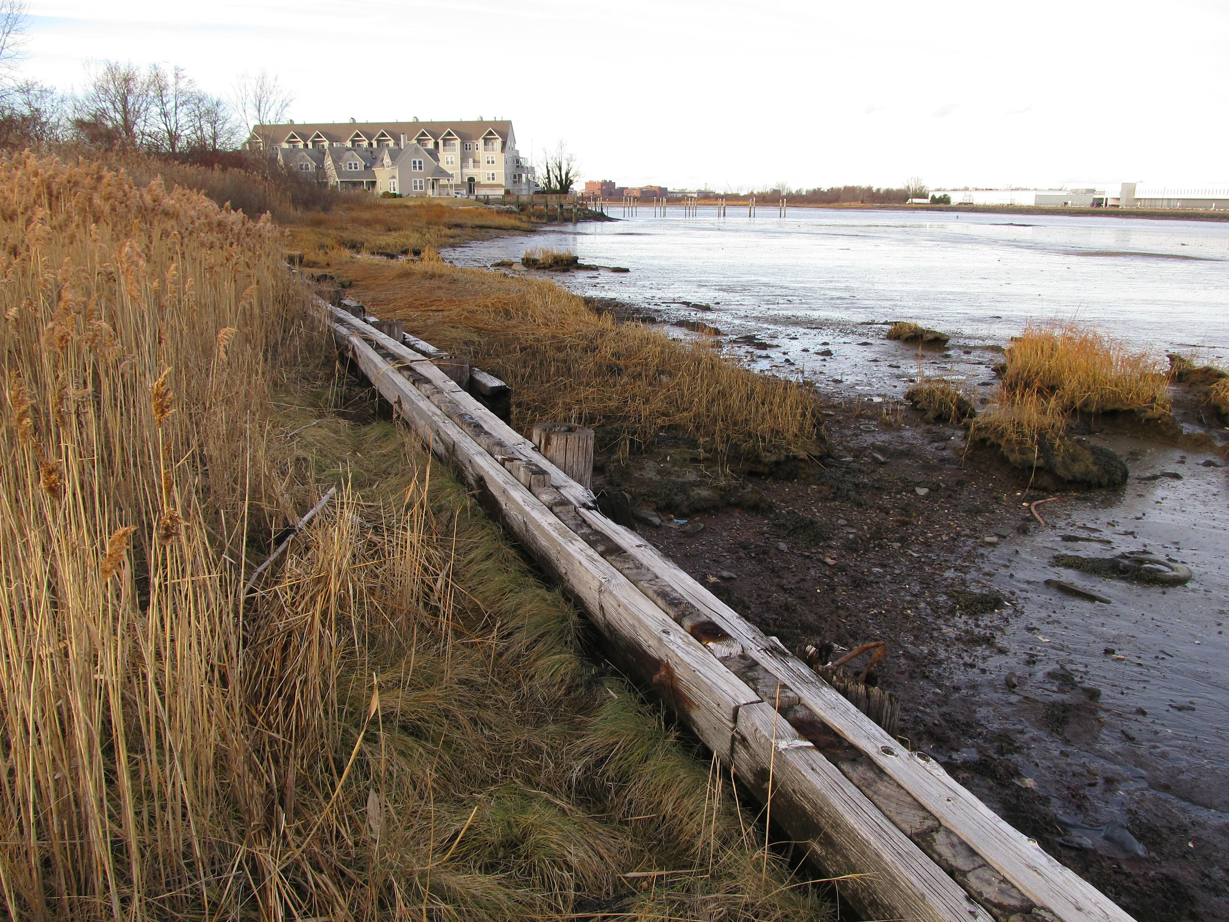 Removal of deteriorated timber bulkhead and invasive species