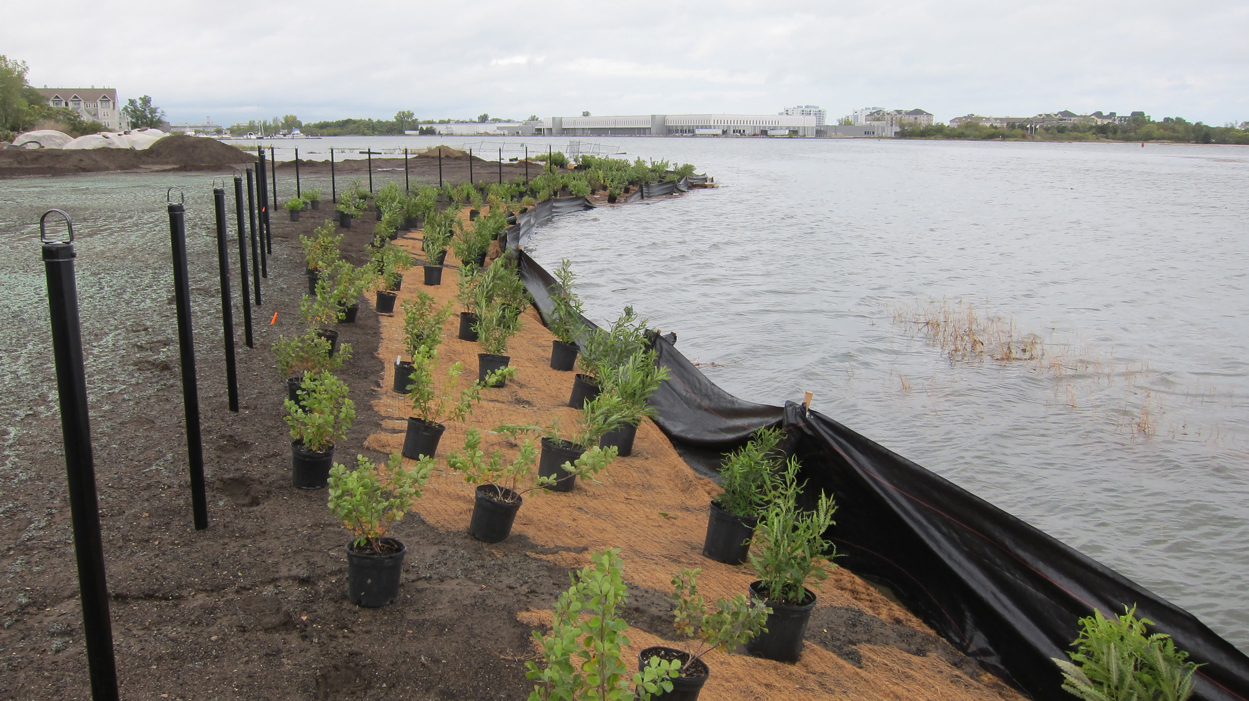 Establishing a green buffer zone. View of high tide conditions with planting buffer installation and salt marsh inudated