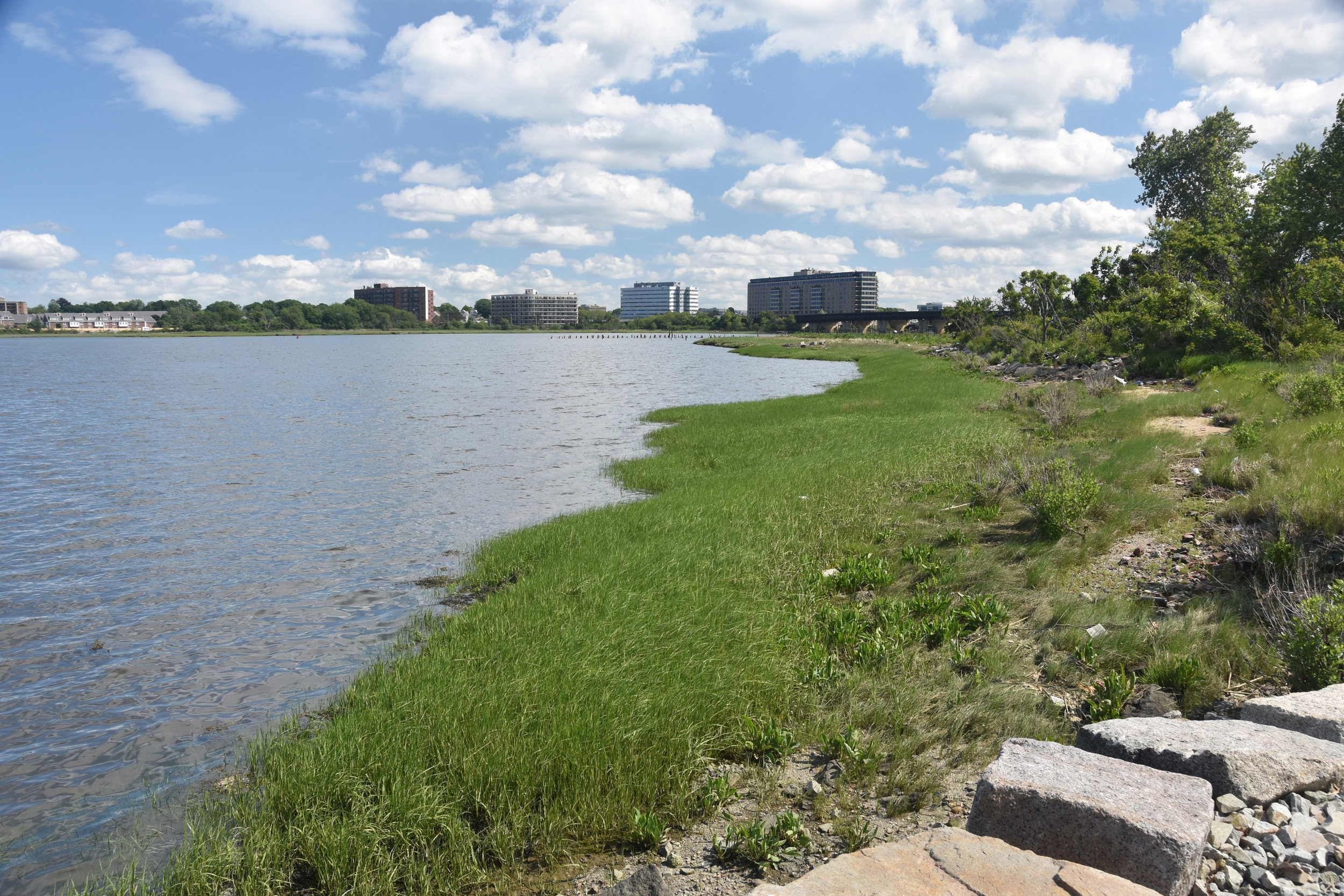 Existing and restored salt marsh along park shoreline