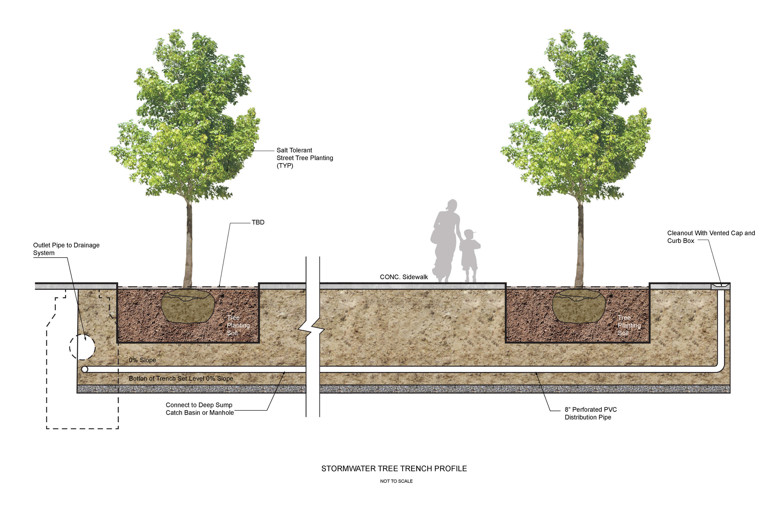 Willard Street - Stormwater Tree Trench Diagram