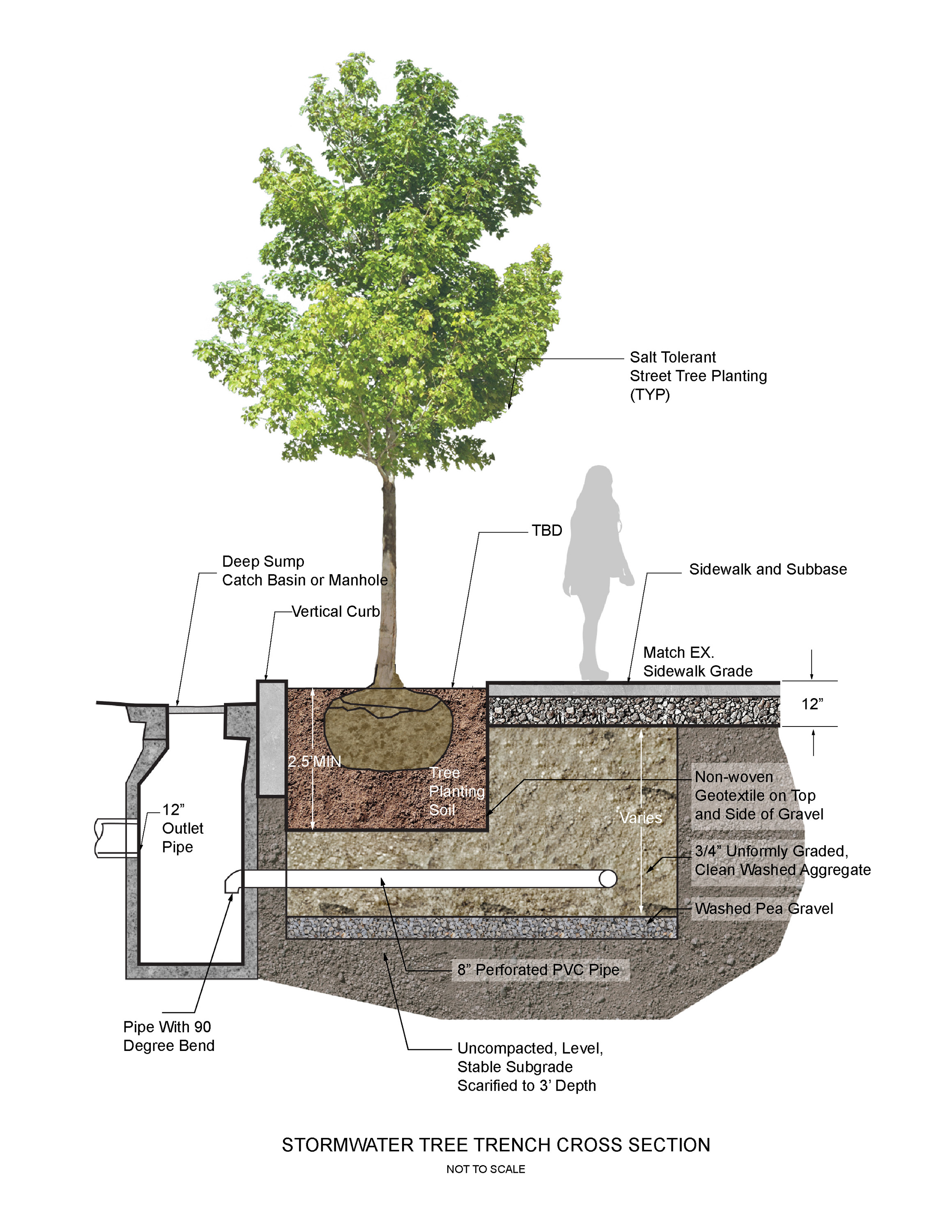 Willard Street - Stormwater Tree Trench Cross Section