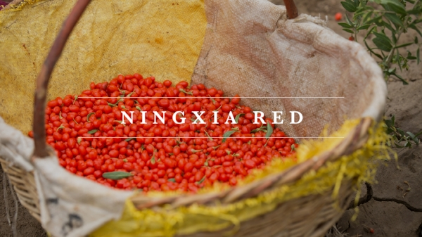 Young Living NingXia Red, Myrrhmaids dive in