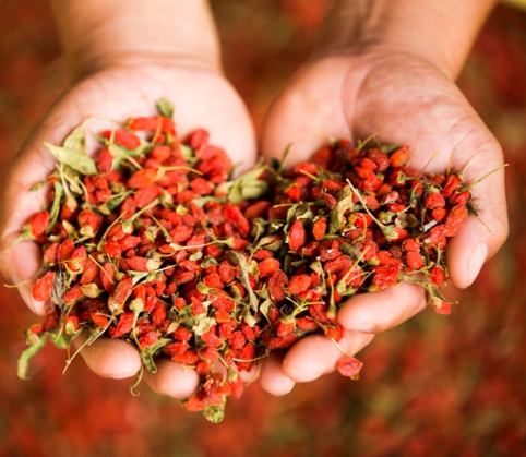NingXia Red wolfberries, myrrhmaids dive in