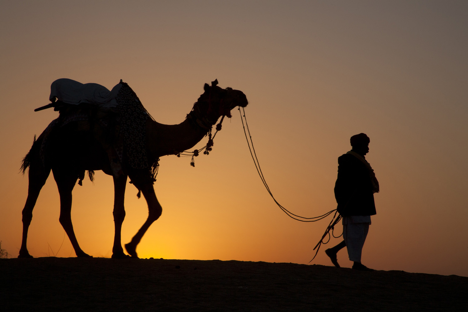 JM-Camel_at_Sunset.jpg