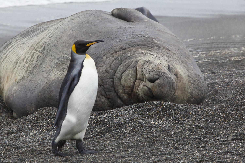 PenguinxSeal-JM.jpg