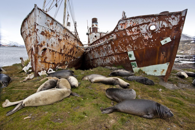 Whaling_ships_wrkd.jpg