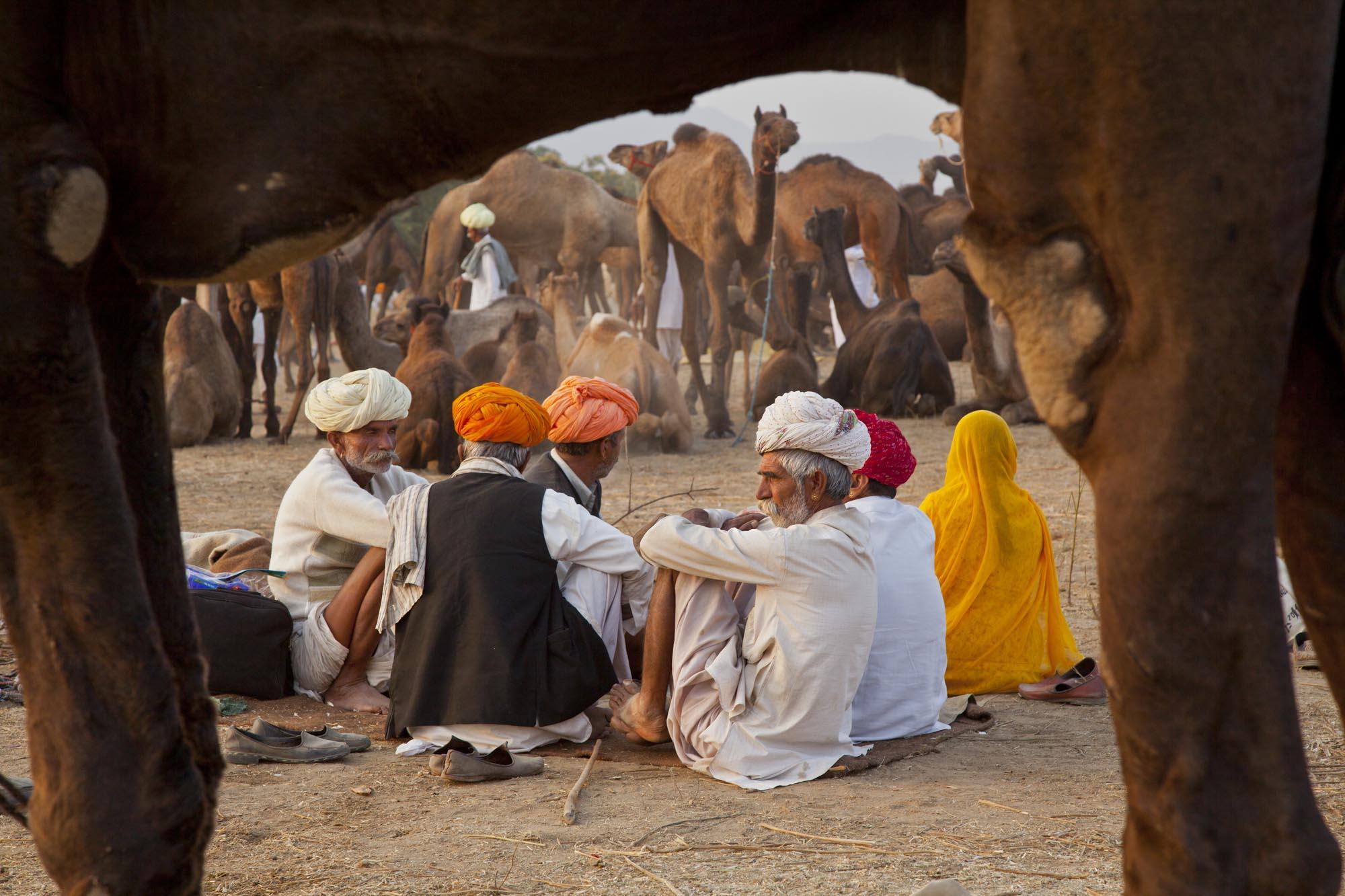 JM-Camel_Traders.jpg