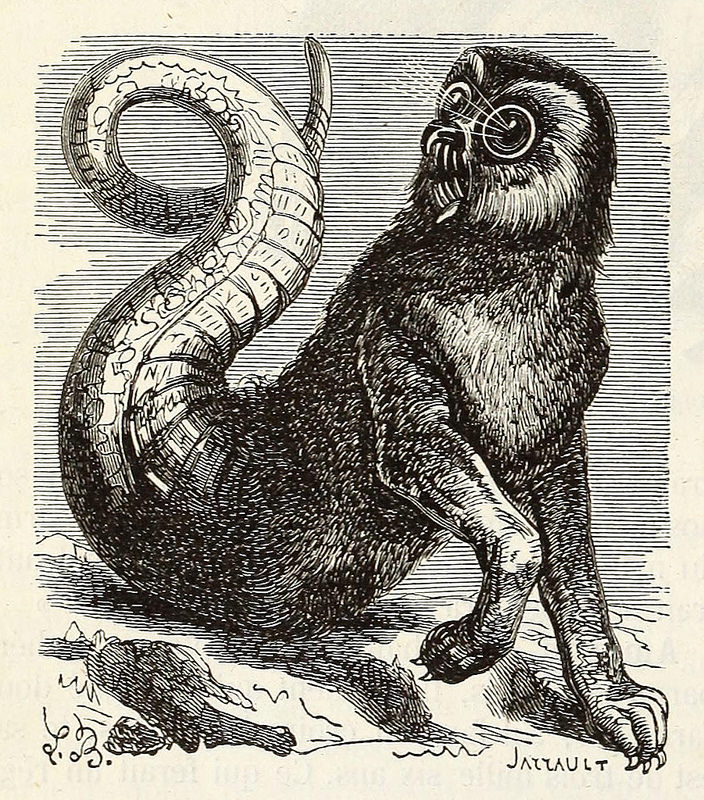 Meet Amon, a devil who can see both past and future, from the glorious   Dictionnaire Infernal .