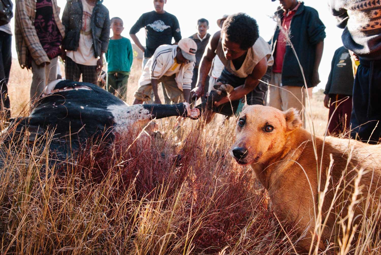 Madagascar-14__AAD2487.jpg