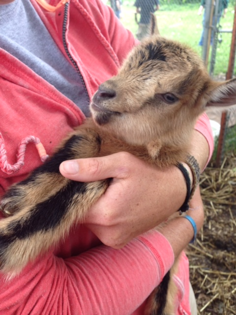 Our goats life at Heifer Village now, you can visit them there!
