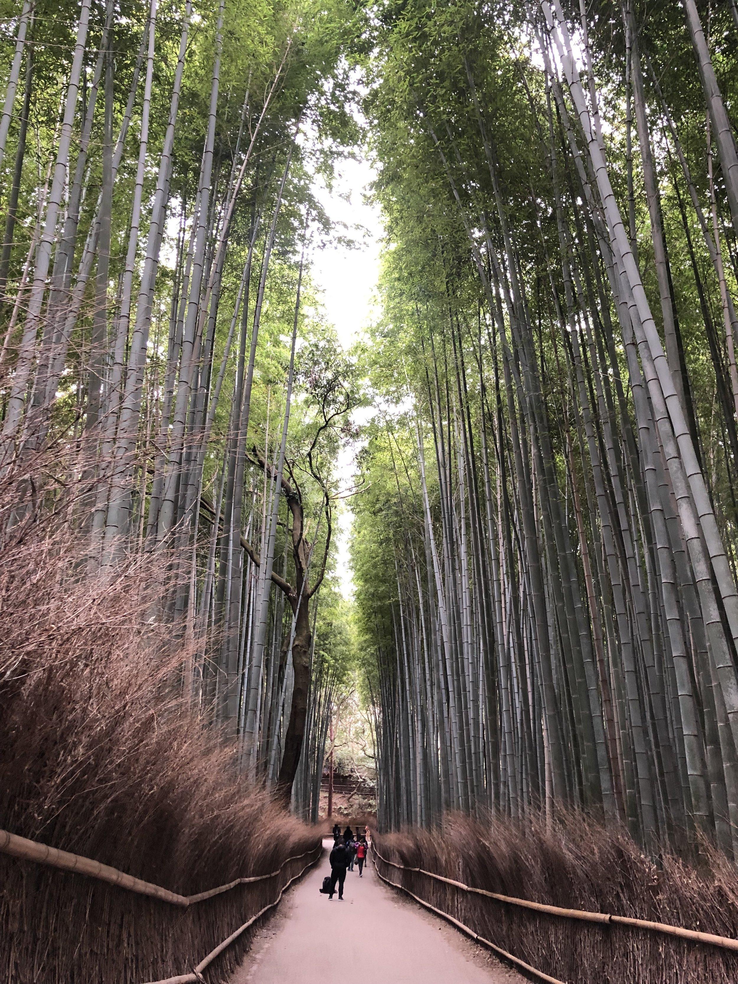 ARASHIYAMA BAMOBOO FOREST