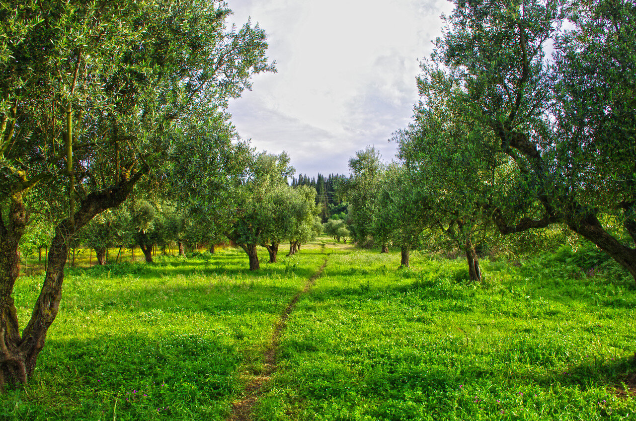 this award winning EVOO is harvested near Ancient Olympia.