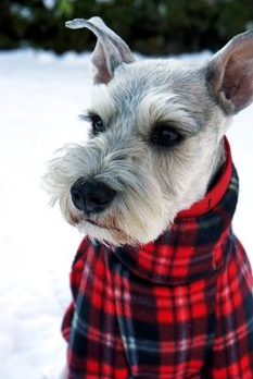 """""""If you're going to walk me in this tundra, at least add layers!"""""""