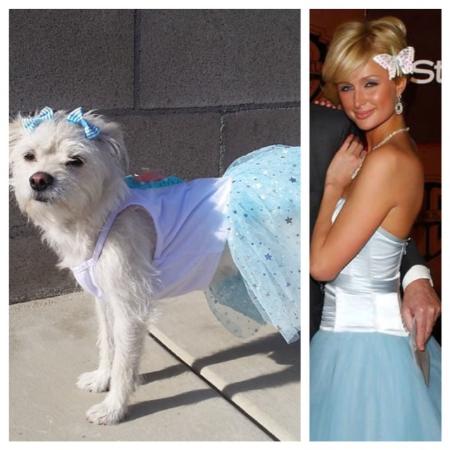 Spoiled Princess Waffles: Paris Hilton