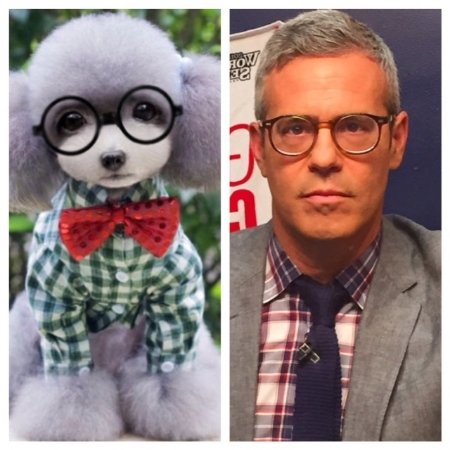 Hipster Hound Gizmo: Andy Cohen