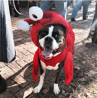 Lobster or dog? Not sure which one.