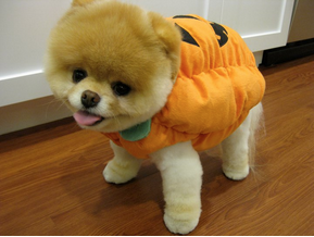 "pumpkin ""cutie""-pie"