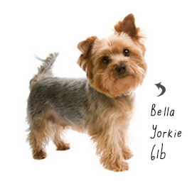 yorkie.png