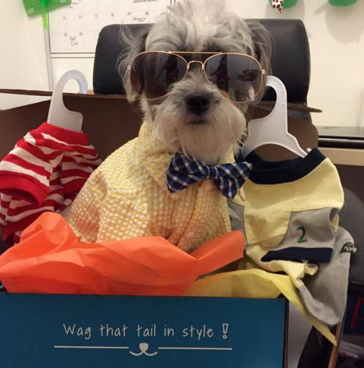 Life is like a box o' pet clothes & accessories you never know what you're gonna get.