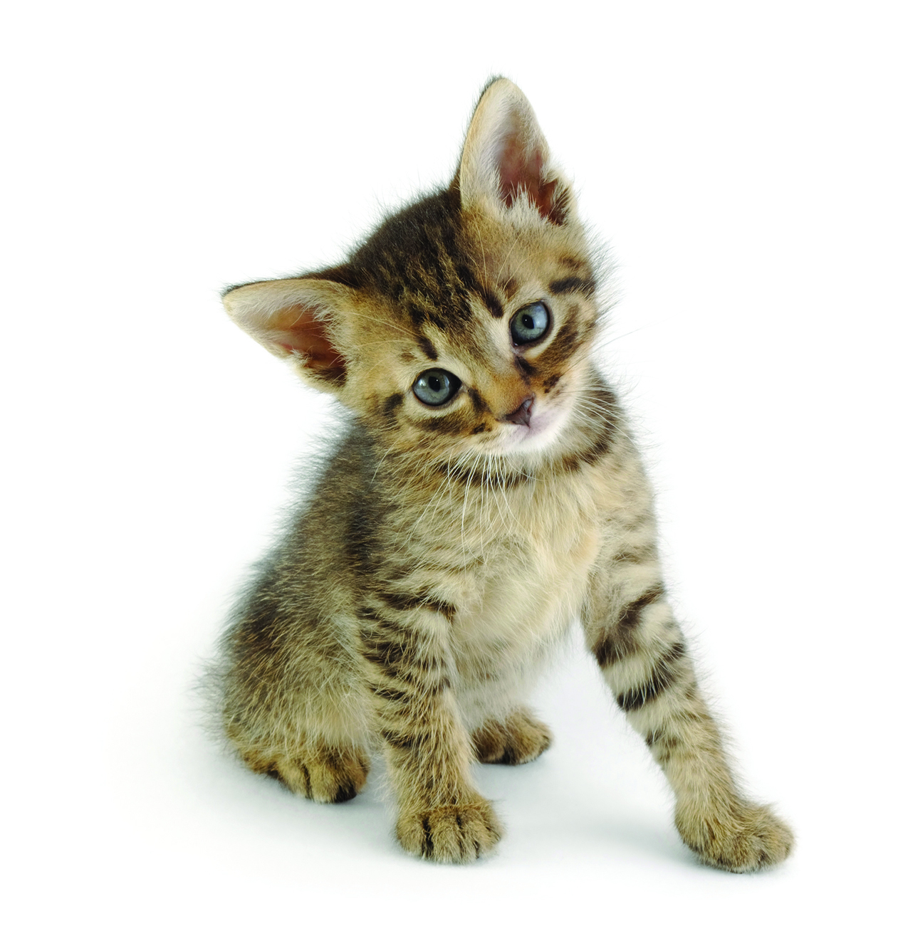 Tips For A Healthy And Happy Kitten Spring Klein Magazine