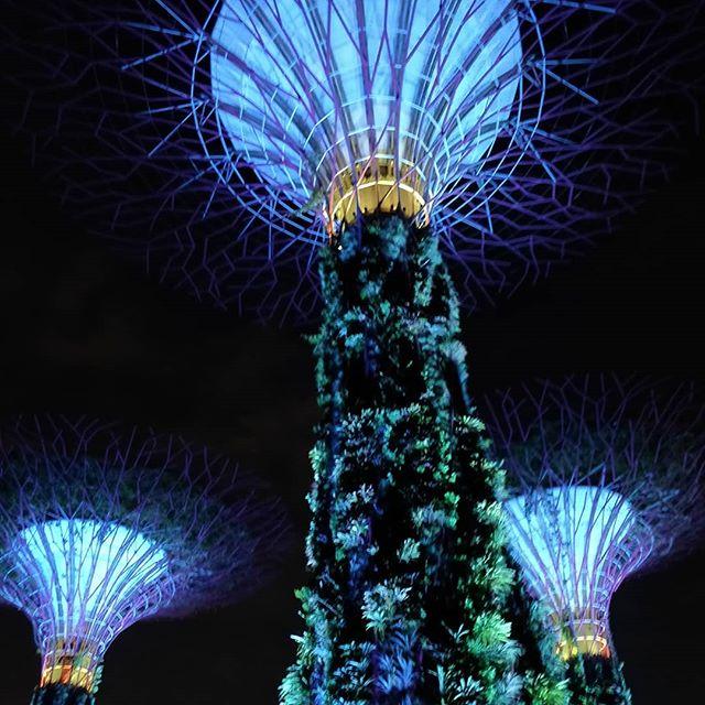 #singapore #gardenbythebay #exploringsingapore #nofilter #tourism