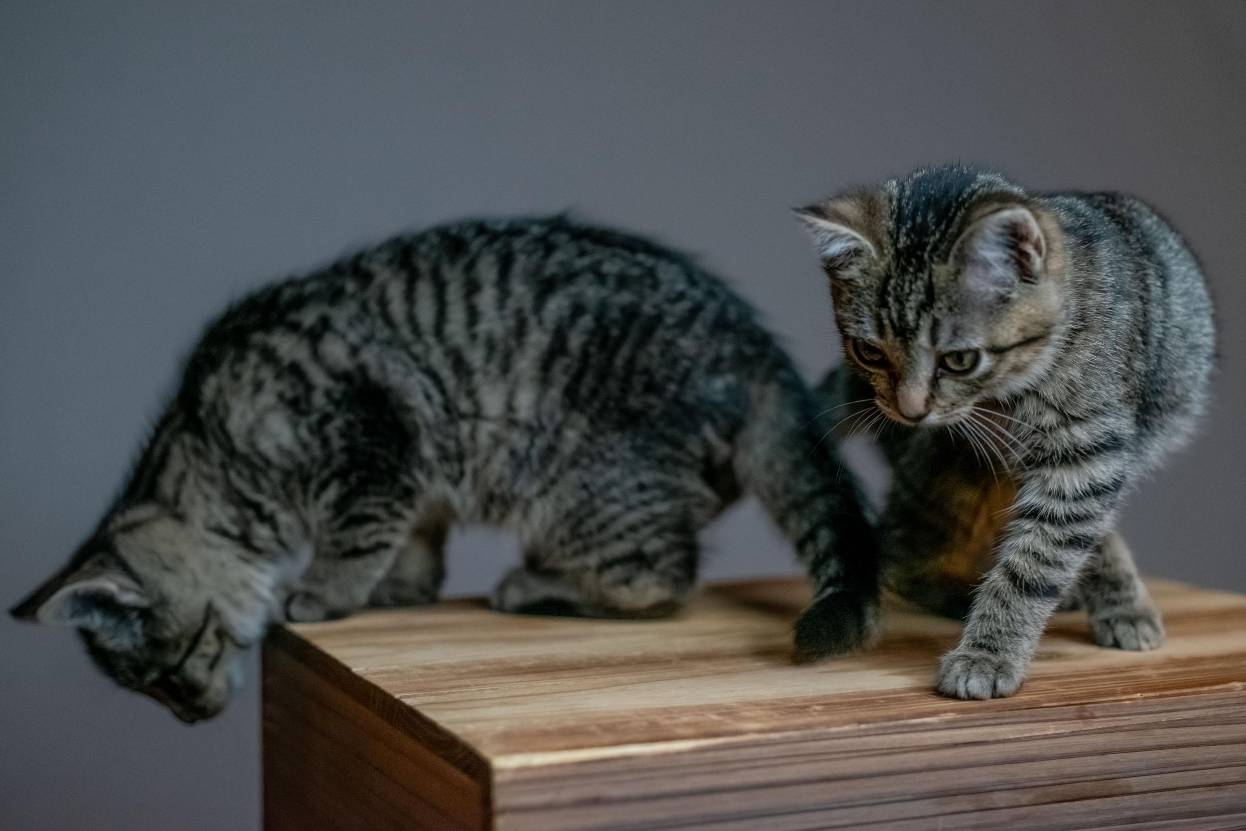 pet+photography+washington+dc+leesburg+vadym+guliuk-106.jpg