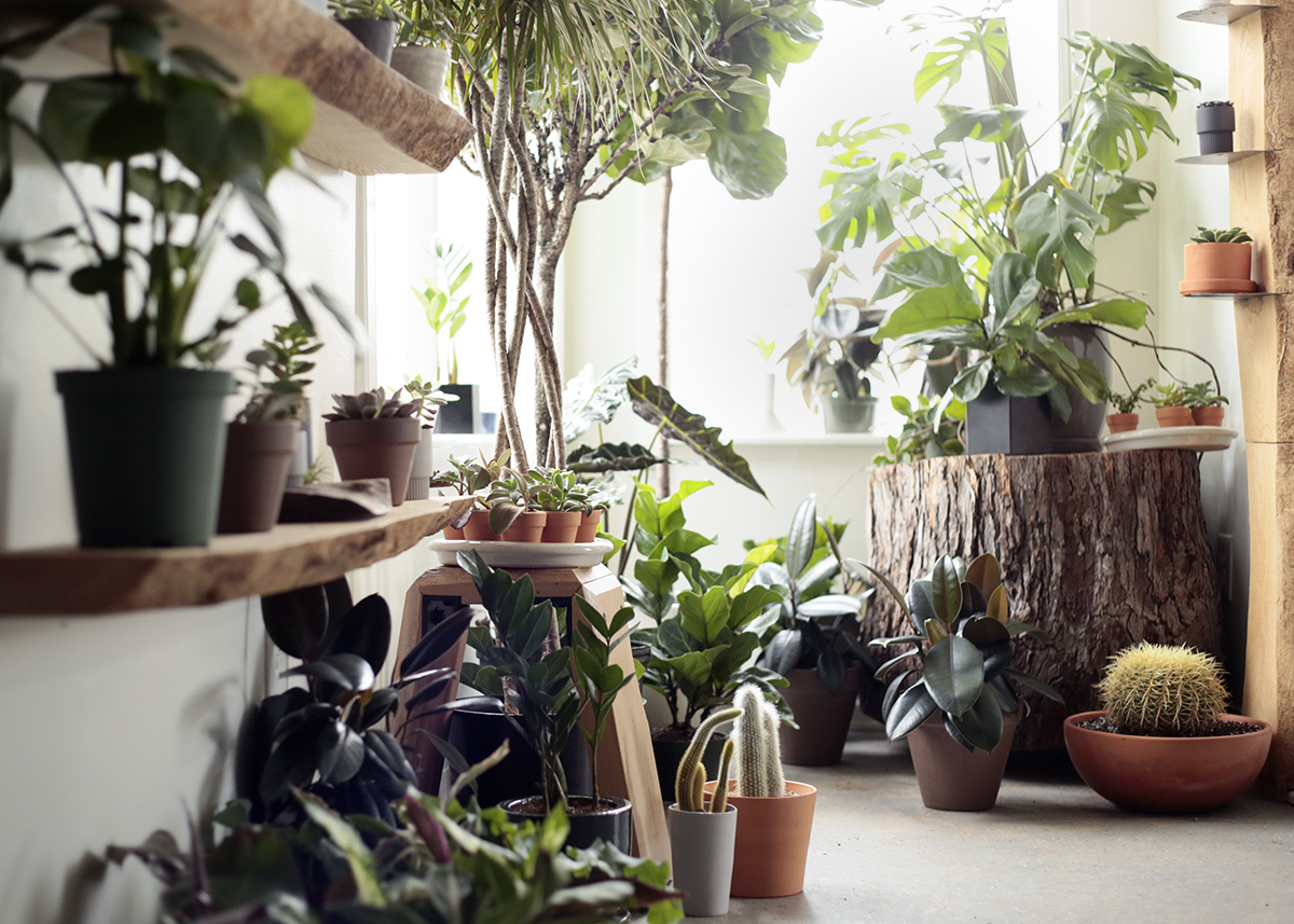 houseplant tips for beginners - cold weather