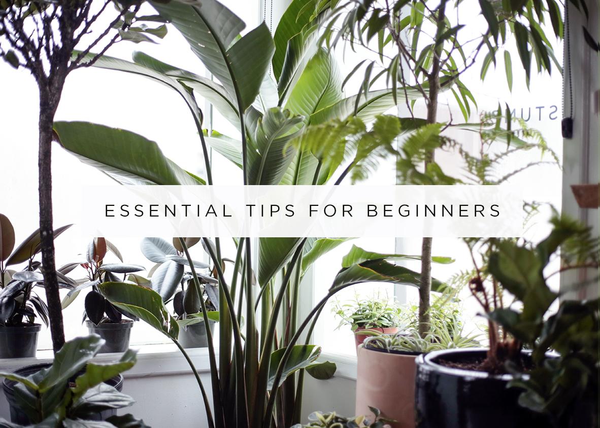 houseplant tips for beginners