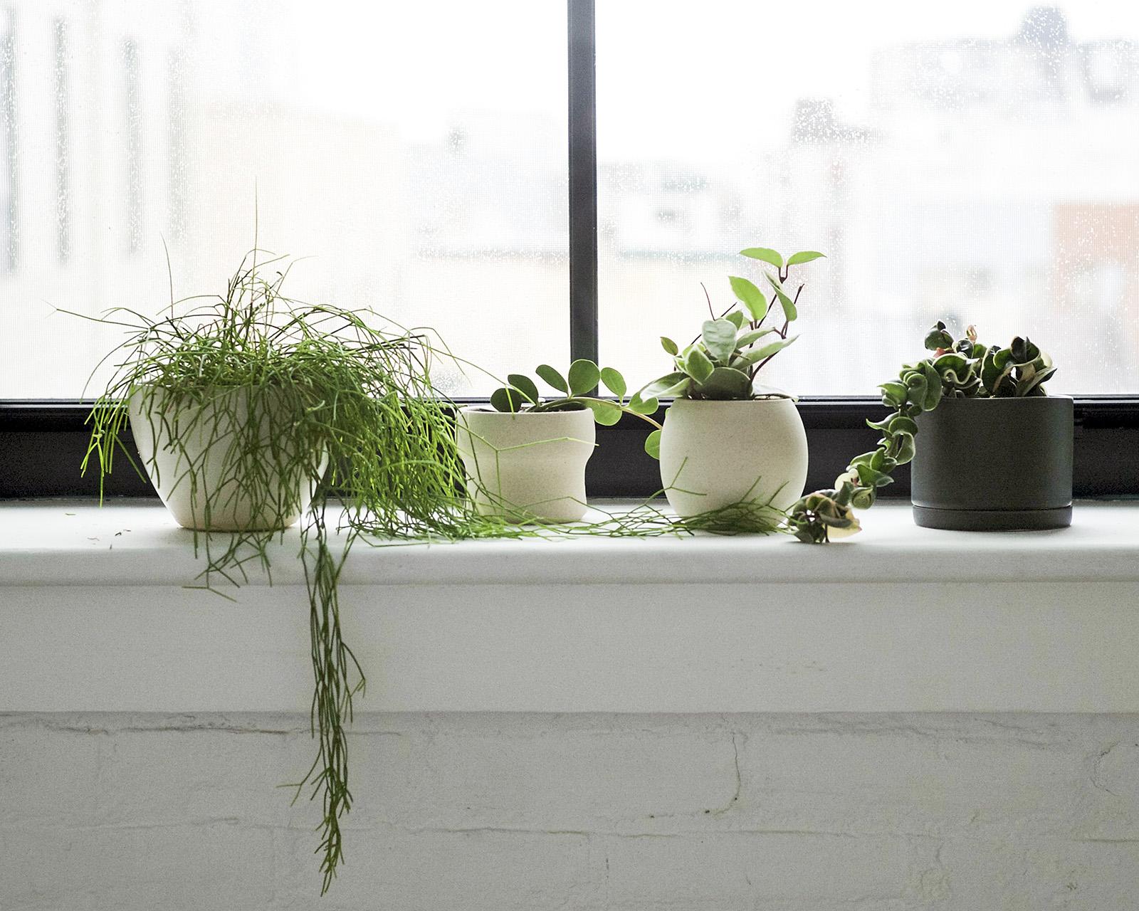 STUMP PLANTS - PEST JOURNAL ARTICLE.jpg