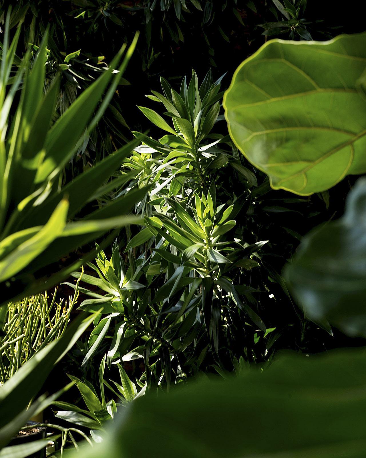 STUMP PLANT PEST JOURNAL ARTICLE.jpg