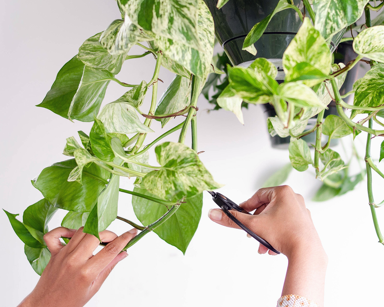 hands and pothos.jpg