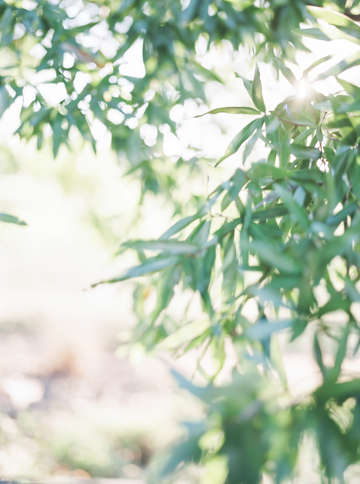 farmatbrusharborwedding-13-2.jpg
