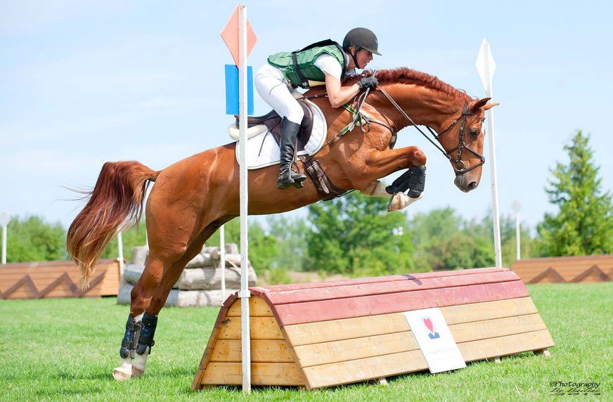 2008 Dutch Gelding - with Kevin for training and then sold as an Eventing prospect to Ontario