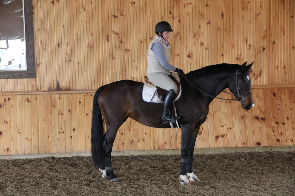 2007 Hanoverian Mare - Trained and Sold by Kevin Holowack