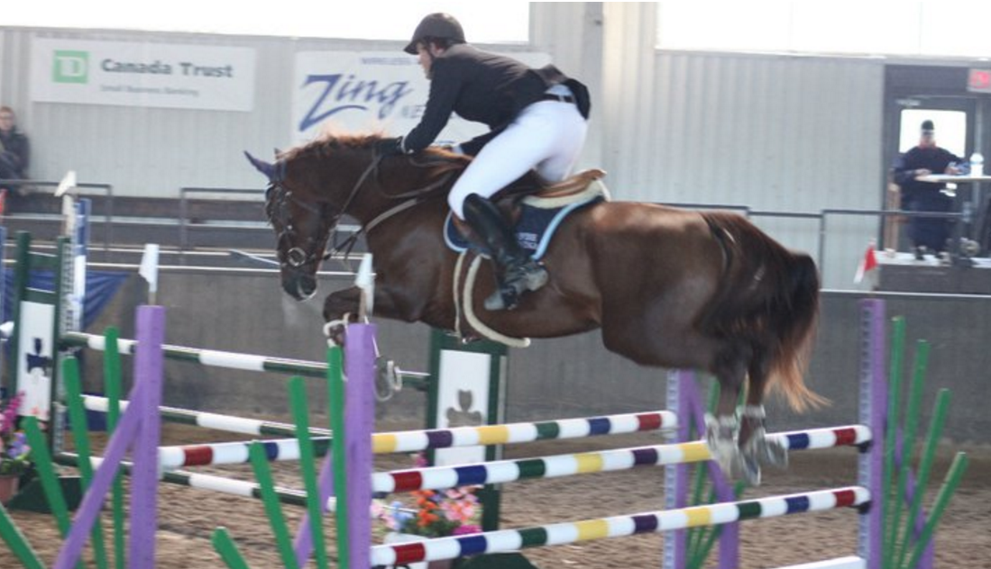 2001 KWPN Gelding - Trained and shown by Kevin Holowack before being sold to the USA