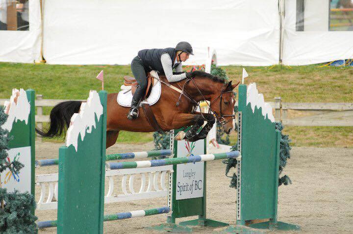 LINUS - 2004 Irish Sport HorseSOLD - BC, CANADA