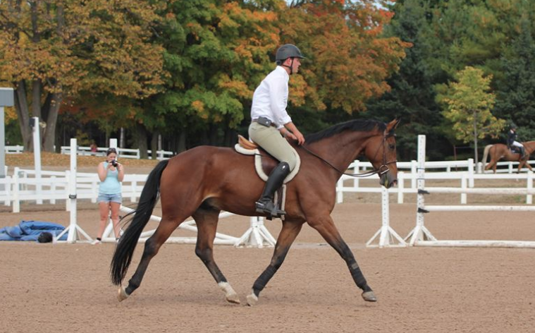 2009 Gelding purchased out of PSI Auction in Germany